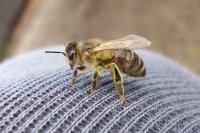 Пчёлка села отдохнуть