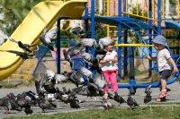 голуби и дети