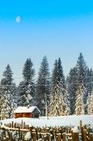Три зимних снимка