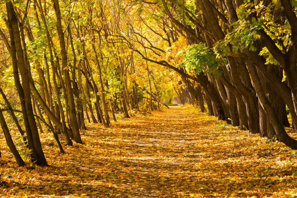 Дорога осени