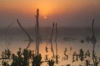 Не шумит тут камыш и не гнутся деревья, лишь болотная тишь и рассвета мгновенье.